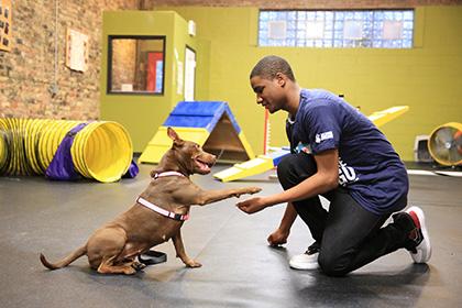 Photo Credit: Safe Humane Chicago